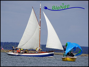 Sorties sur le bassin d'Arcachon avec l'association Bionav